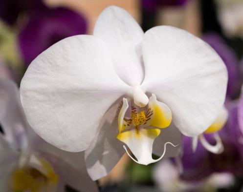 Orchids-0248