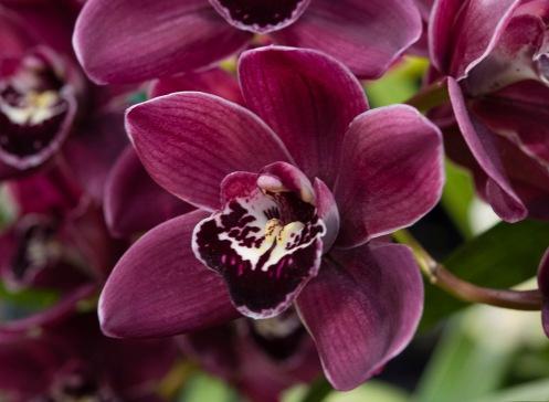Orchids-0251