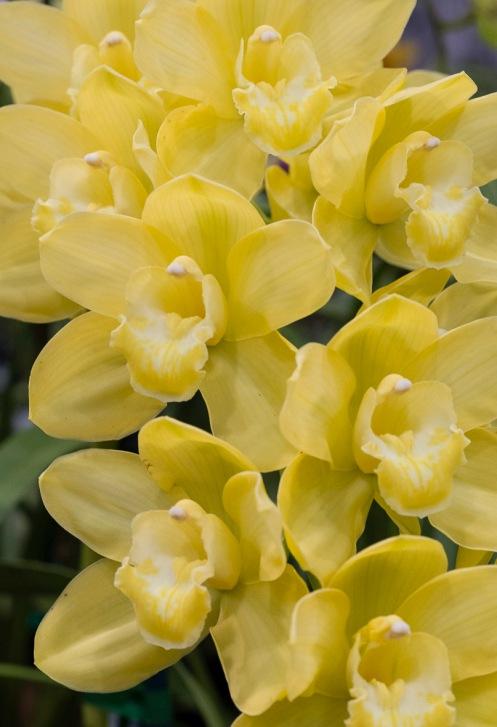 Orchids-0285